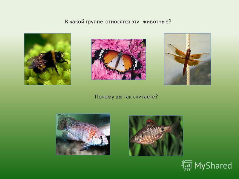 К какой группе относятся эти животные? Почему вы так считаете?