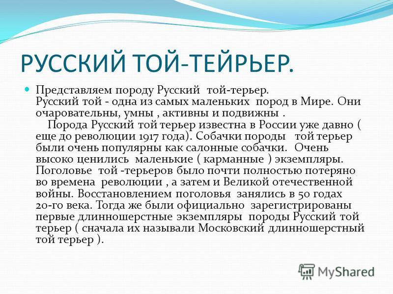 РУССКИЙ ТОЙ-ТЕЙРЬЕР. Представляем породу Русский той-терьер. Русский той - одна из самых маленьких пород в Мире. Они очаровательны, умны, активны и подвижны. Порода Русский той терьер известна в России уже давно ( еще до революции 1917 года). Собачки