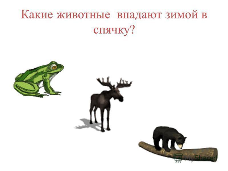 Какие животные впадают зимой в спячку?