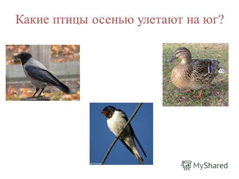 Какие птицы осенью улетают на юг?