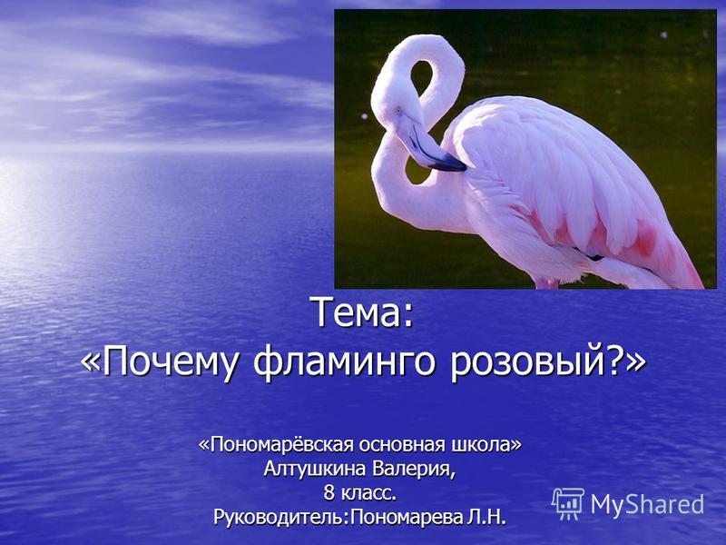 Тема: «Почему фламинго розовый?» «Пономарёвская основная школа» Алтушкина Валерия, 8 класс. Руководитель:Пономарева Л.Н.