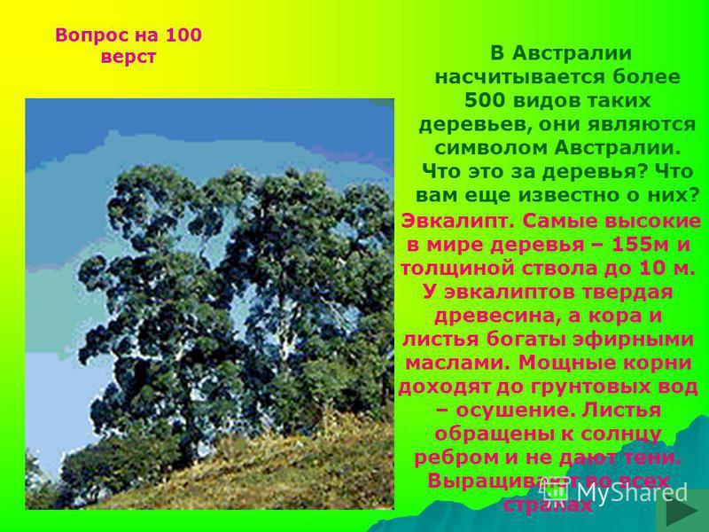 В Австралии насчитывается более 500 видов таких деревьев, они являются символом Австралии. Что это за деревья? Что вам еще известно о них? Эвкалипт. Самые высокие в мире деревья – 155 м и толщиной ствола до 10 м. У эвкалиптов твердая древесина, а кор