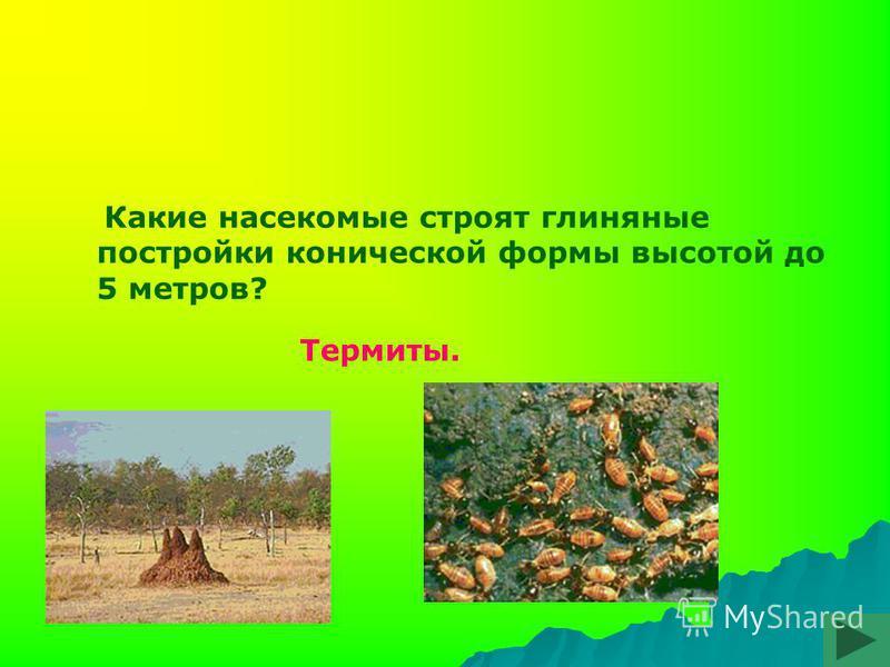 Какие насекомые строят глиняные постройки конической формы высотой до 5 метров? Термиты.