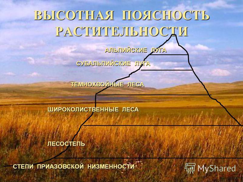 Растительность Краснодарского края