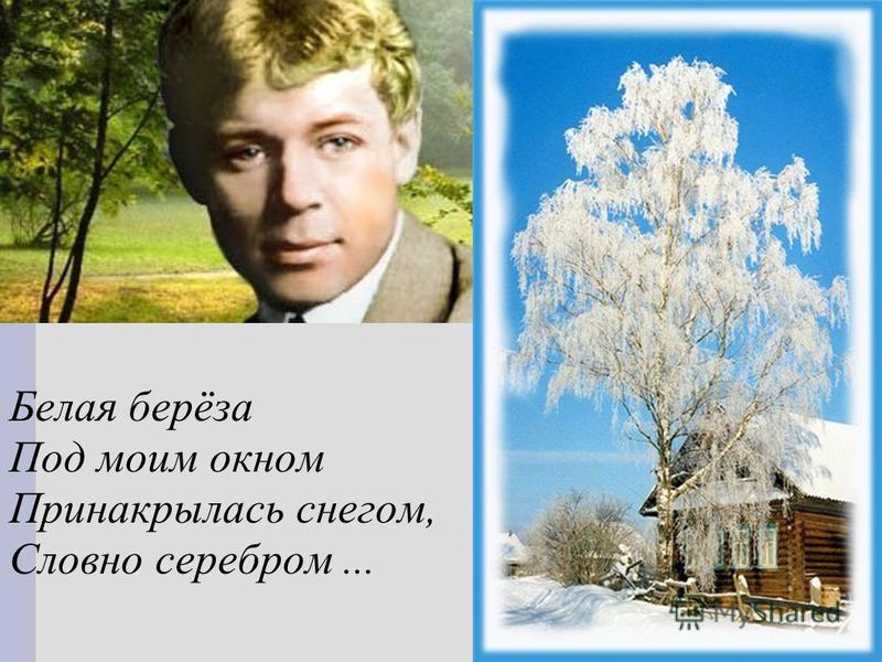 Белая берёза Под моим окном Принакрылась снегом, Словно серебром...