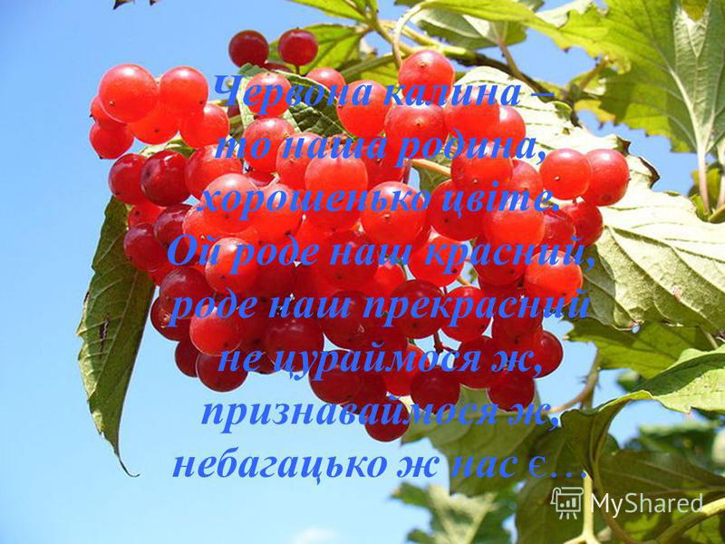 Червона калина – то наша родина, хорошенько цвіте. Ой роде наш красний, роде наш прекрасний не цураймося ж, признаваймося ж, небагацько ж нас є…