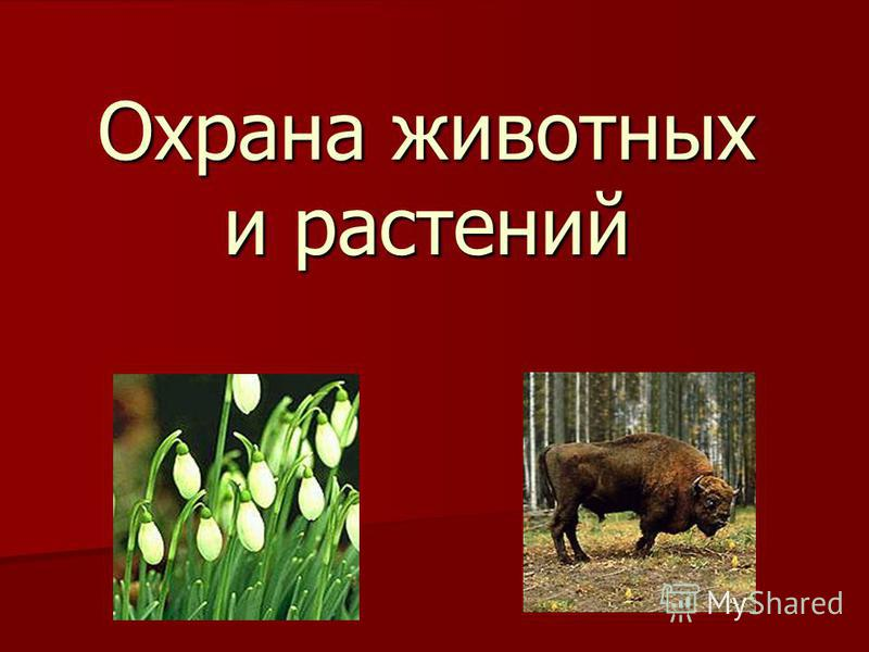Охрана животных и растений