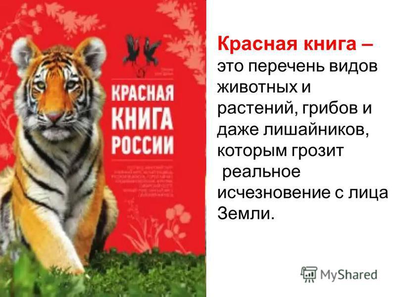 Красная книга – это перечень видов животных и растений, грибов и даже лишайников, которым грозит реальное исчезновение с лица Земли.