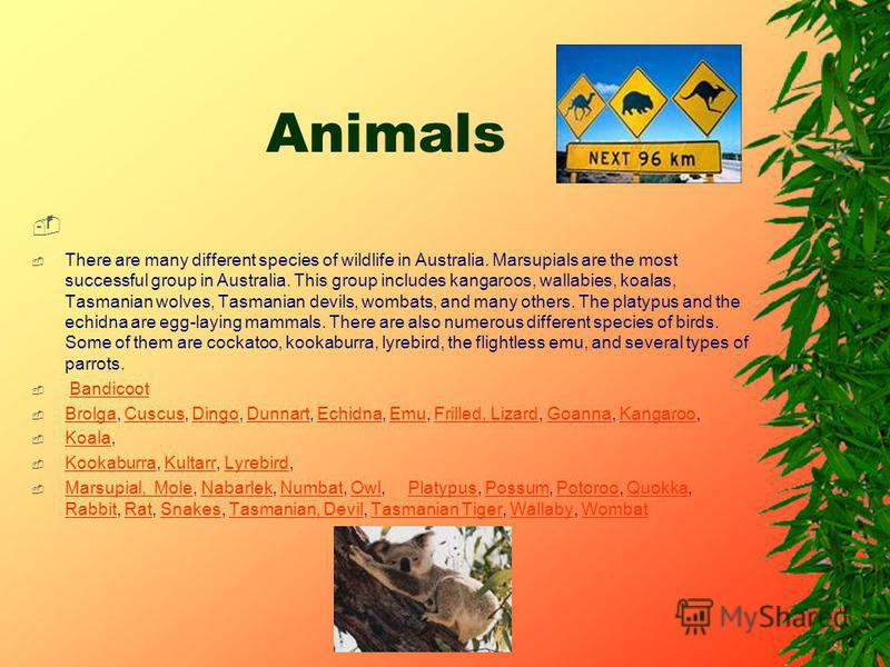 Animals There are many different species of wildlife in Australia. Marsupials are the most successful group in Australia. This group includes kangaroos, wallabies, koalas, Tasmanian wolves, Tasmanian devils, wombats, and many others. The platypus and