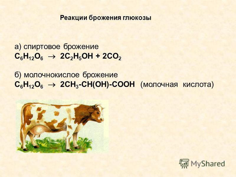 Реакции брожения глюкозы а) спиртовое брожение C 6 H 12 O 6 2C 2 H 5 OH + 2CO 2 б) молочнокислое брожение C 6 H 12 O 6 2CH 3 -CH(OH)-COOH (молочная кислота)