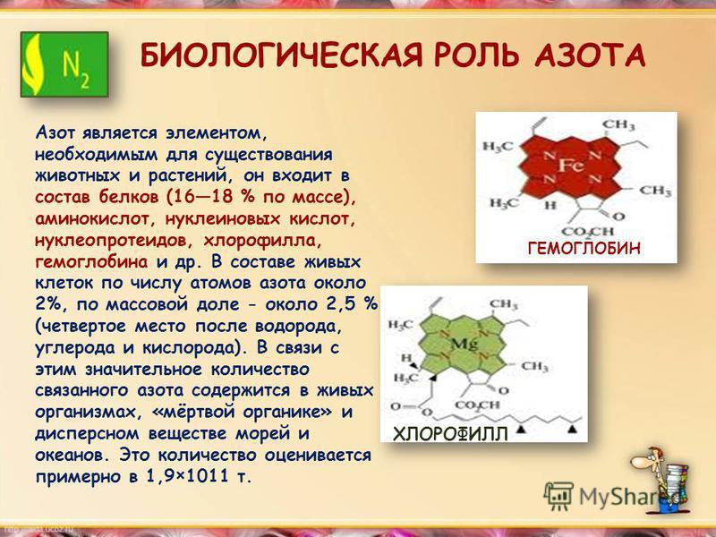 БИОЛОГИЧЕСКАЯ РОЛЬ АЗОТА Азот является элементом, необходимым для существования животных и растений, он входит в состав белков (1618 % по массе), аминокислот, нуклеиновых кислот, нуклеопротеидов, хлорофилла, гемоглобина и др. В составе живых клеток п