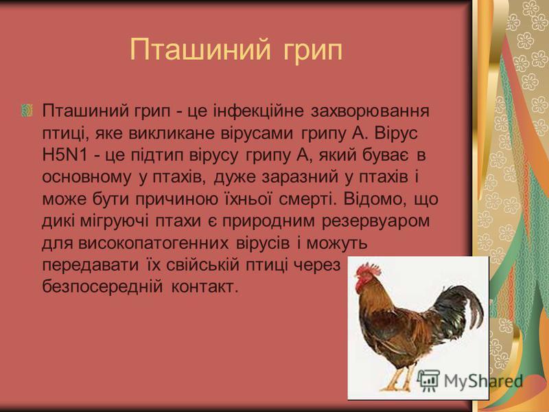 Пташиний грип Пташиний грип - це інфекційне захворювання птиці, яке викликане вірусами грипу А. Вірус H5N1 - це підтип вірусу грипу A, який буває в основному у птахів, дуже заразний у птахів і може бути причиною їхньої смерті. Відомо, що дикі мігруюч