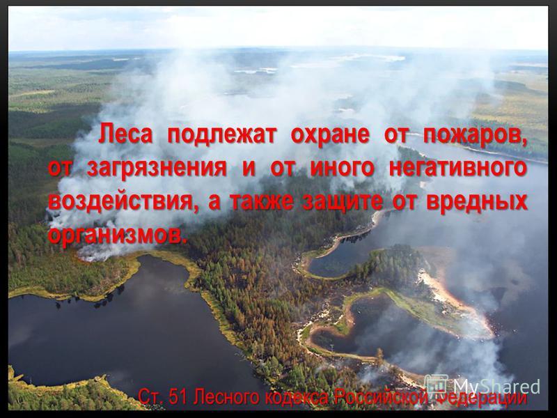 Леса подлежат охране от пожаров, от загрязнения и от иного негативного воздействия, а также защите от вредных организмов. Леса подлежат охране от пожаров, от загрязнения и от иного негативного воздействия, а также защите от вредных организмов. Ст. 51