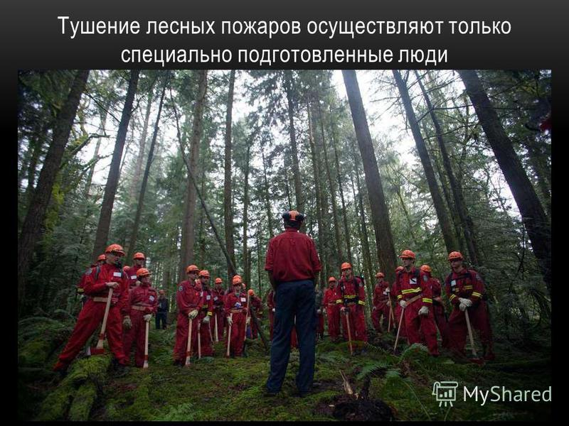 Тушение лесных пожаров осуществляют только специально подготовленные люди