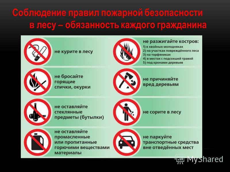 Соблюдение правил пожарной безопасности в лесу – обязанность каждого гражданина