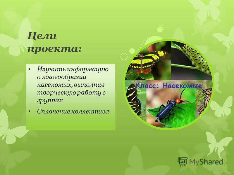 Цели проекта: Изучить информацию о многообразии насекомых, выполнив творческую работу в группах Сплочение коллектива