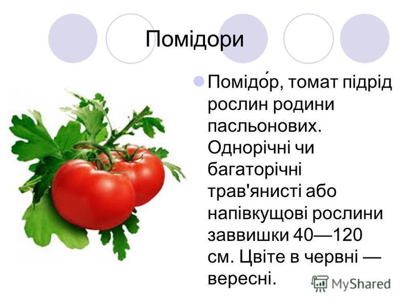 Помідори Помідо́р, томат підрід рослин родини пасльонових. Однорічні чи багаторічні трав'янисті або напівкущові рослини заввишки 40120 см. Цвіте в червні вересні.