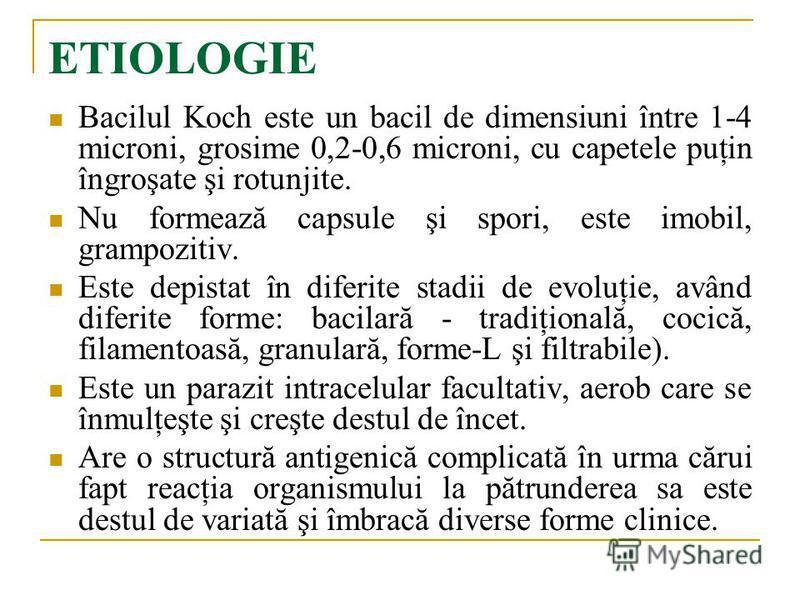 ETIOLOGIE Bacilul Koch este un bacil de dimensiuni între 1-4 microni, grosime 0,2-0,6 microni, cu capetele puţin îngroşate şi rotunjite. Nu formează capsule şi spori, este imobil, grampozitiv. Este depistat în diferite stadii de evoluţie, având difer
