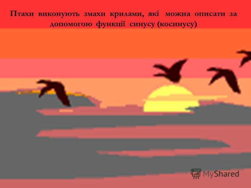 Птахи виконують змахи крилами, які можна описати за допомогою функції синусу (косинусу)