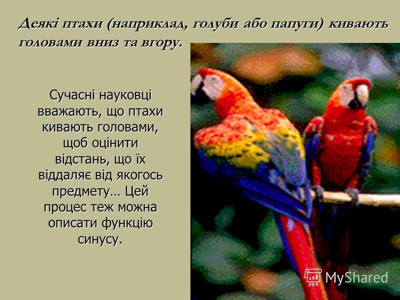 Сучасні науковці вважають, що птахи кивають головами, щоб оцінити відстань, що їх віддаляє від якогось предмету… Цей процес теж можна описати функцію синусу. Деякі птахи (наприклад, голуби або папуги) кивають головами вниз та вгору.