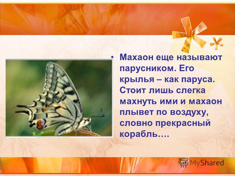 Махаон еще называют парусником. Его крылья – как паруса. Стоит лишь слегка махнуть ими и махаон плывет по воздуху, словно прекрасный корабль….