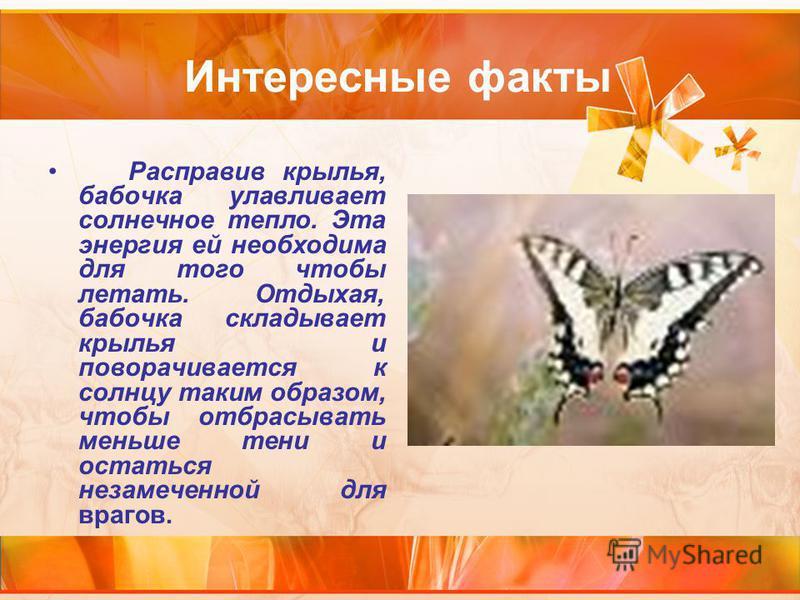 Интересные факты Расправив крылья, бабочка улавливает солнечное тепло. Эта энергия ей необходима для того чтобы летать. Отдыхая, бабочка складывает крылья и поворачивается к солнцу таким образом, чтобы отбрасывать меньше тени и остаться незамеченной