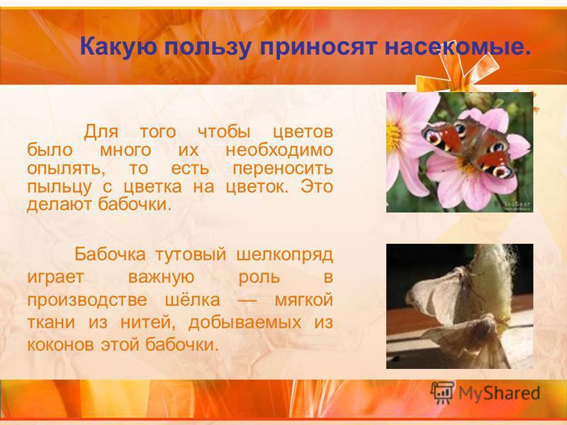 Какую пользу приносят насекомые. Для того чтобы цветов было много их необходимо опылять, то есть переносить пыльцу с цветка на цветок. Это делают бабочки. Бабочка тутовый шелкопряд играет важную роль в производстве шёлка мягкой ткани из нитей, добыва