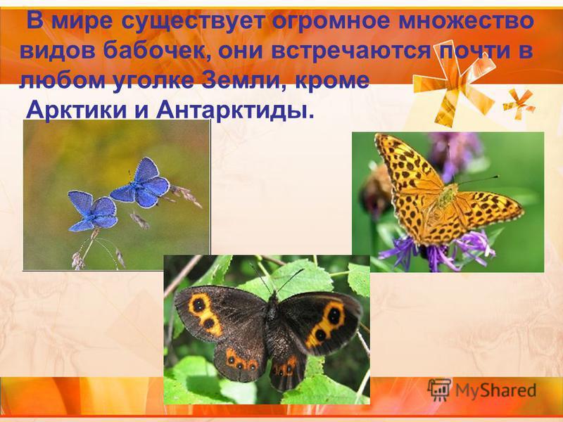 В мире существует огромное множество видов бабочек, они встречаются почти в любом уголке Земли, кроме Арктики и Антарктиды.