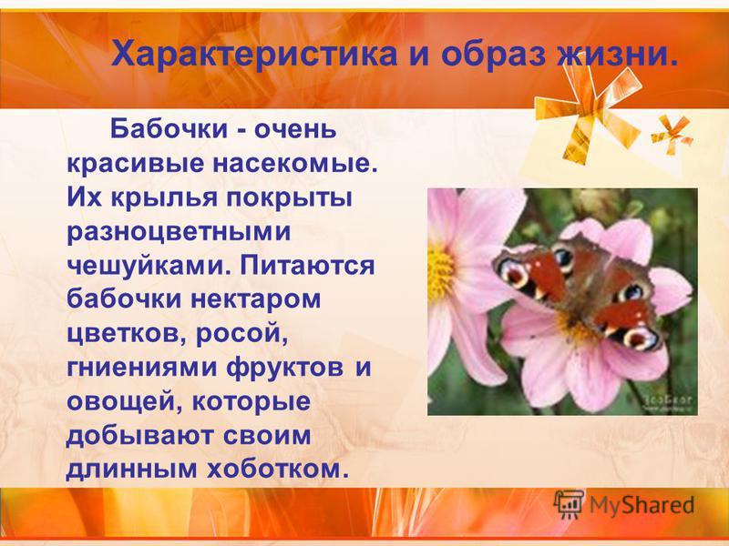Бабочки - очень красивые насекомые. Их крылья покрыты разноцветными чешуйками. Питаются бабочки нектаром цветков, росой, гниениями фруктов и овощей, которые добывают своим длинным хоботком. Характеристика и образ жизни.