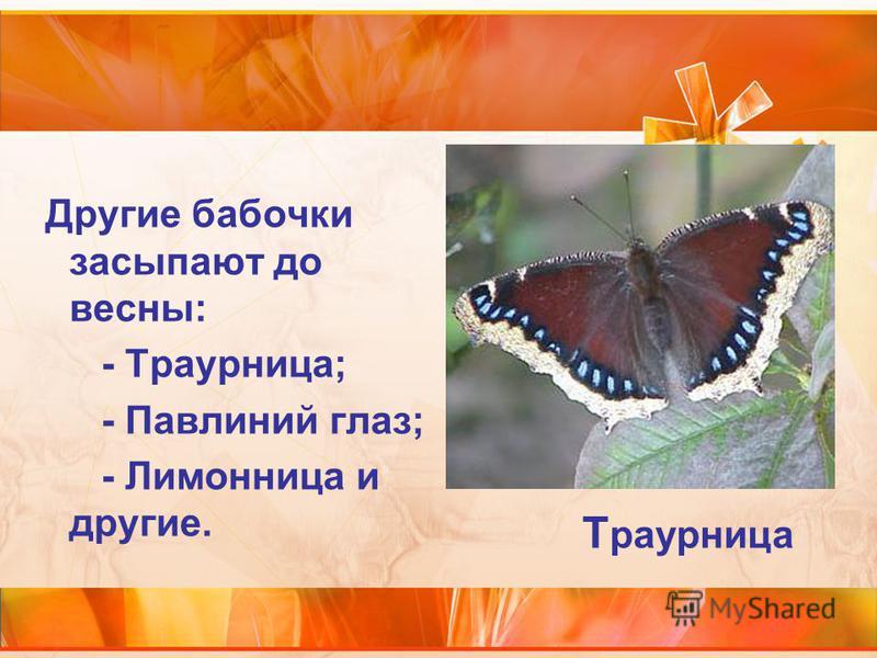 Другие бабочки засыпают до весны: - Траурница; - Павлиний глаз; - Лимонница и другие. Т раурница