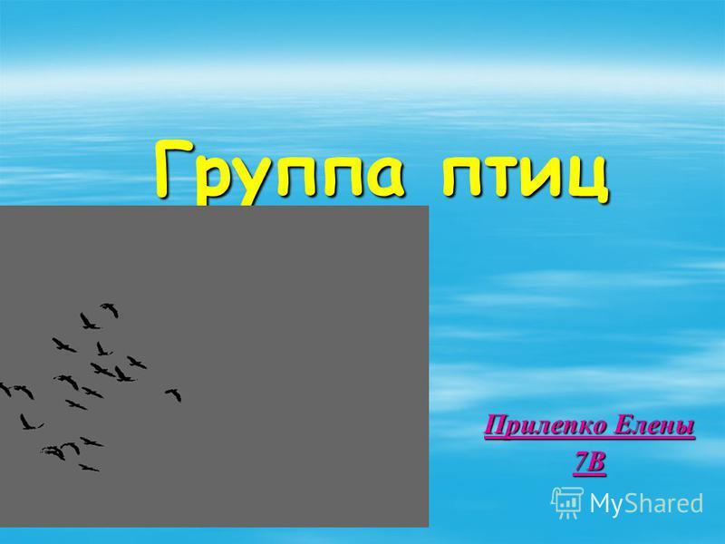 Группа птиц Прилепко Елены 7В