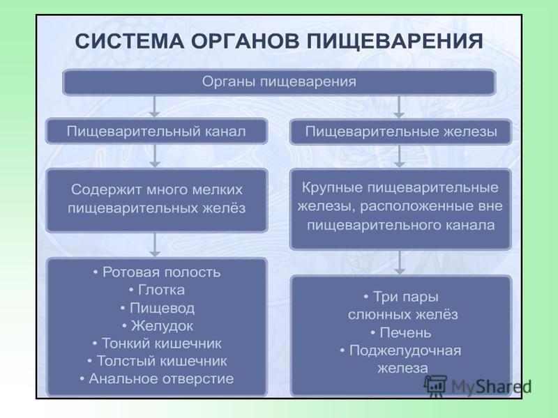 Задание 2. Строение пищеварительной системы 1 2 35 6 4 7 8 9 10 11 12