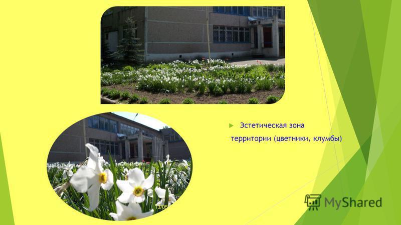 Эстетическая зона территории (цветники, клумбы)
