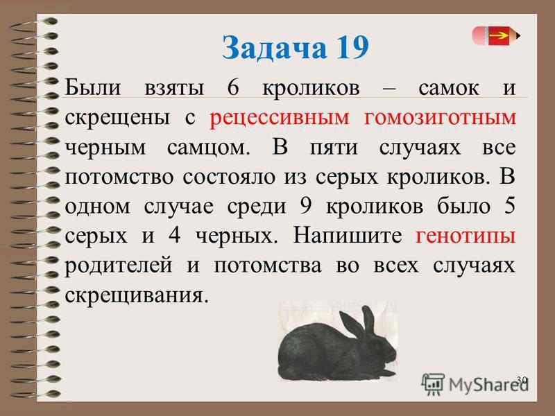 30 Задача 19 Были взяты 6 кроликов – самок и скрещены с рецессивным гомозиготныййм черным самцом. В пяти случаях все потомство состояло из серых кроликов. В одном случае среди 9 кроликов было 5 серых и 4 черных. Напишите генотипы родителей и потомств