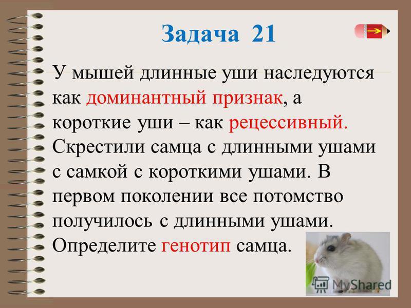32 Задача 21 У мышей длинные уши наследуются как доминантный признак, а короткие уши – как рецессивный. Скрестили самца с длинными ушами с самкой с короткими ушами. В первом поколении все потомство получилось с длинными ушами. Определите генотип самц