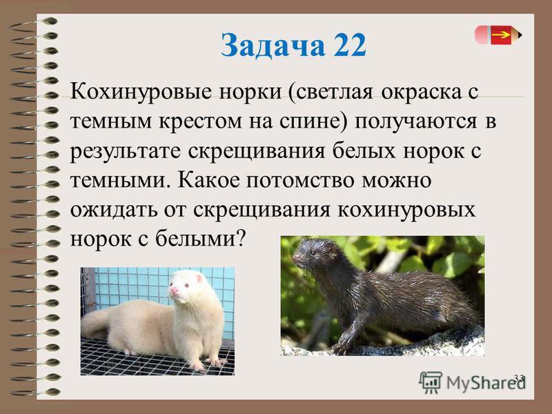 33 Задача 22 Кохинуровые норки (светлая окраска с темным крестом на спине) получаются в результате скрещивания белых норок с темными. Какое потомство можно ожидать от скрещивания кохинуровых норок с белыми?