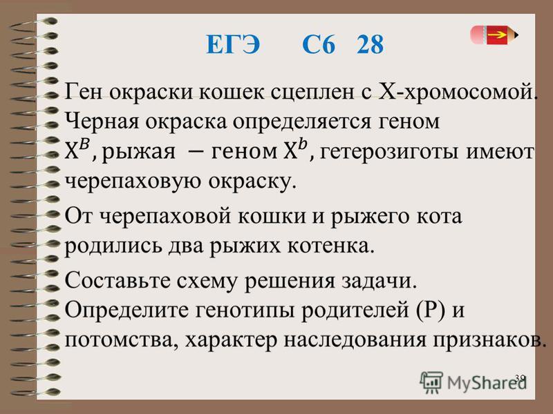 ЕГЭ С6 28 39
