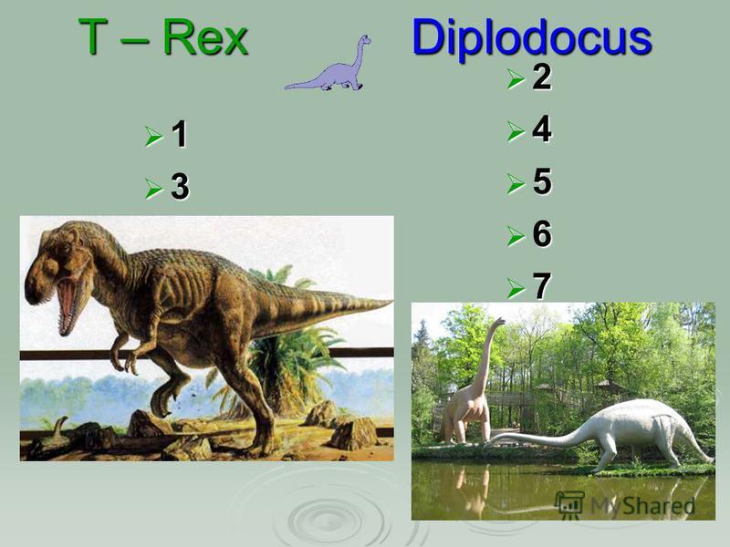 T – Rex Diplodocus 1 3 2 4 5 6 7