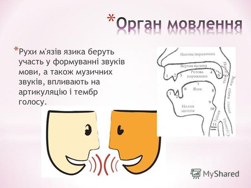 * Рухи м'язів язика беруть участь у формуванні звуків мови, а також музичних звуків, впливають на артикуляцію і тембр голосу.
