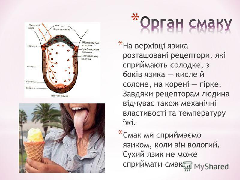 * На верхівці язика розташовані рецептори, які сприймають солодке, з боків язика кисле й солоне, на корені гірке. Завдяки рецепторам людина відчуває також механічні властивості та температуру їжі. * Смак ми сприймаємо язиком, коли він вологий. Сухий
