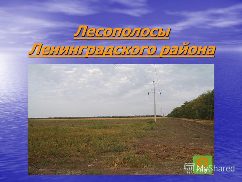 Лесополосы Ленинградского района