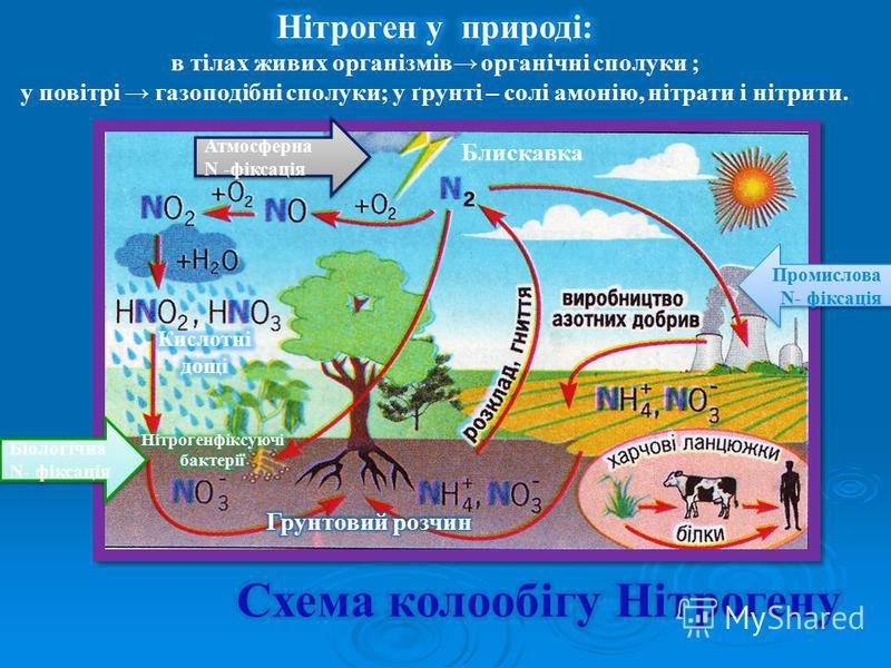 Блискавка Промислова N- фіксація Промислова N- фіксація Біологічна N- фіксація Атмосферна N -фіксація Атмосферна N -фіксація