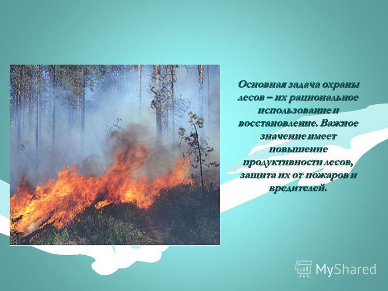 Основная задача охраны лесов – их рациональное использование и восстановление. Важное значение имеет повышение продуктивности лесов, защита их от пожаров и вредителей.