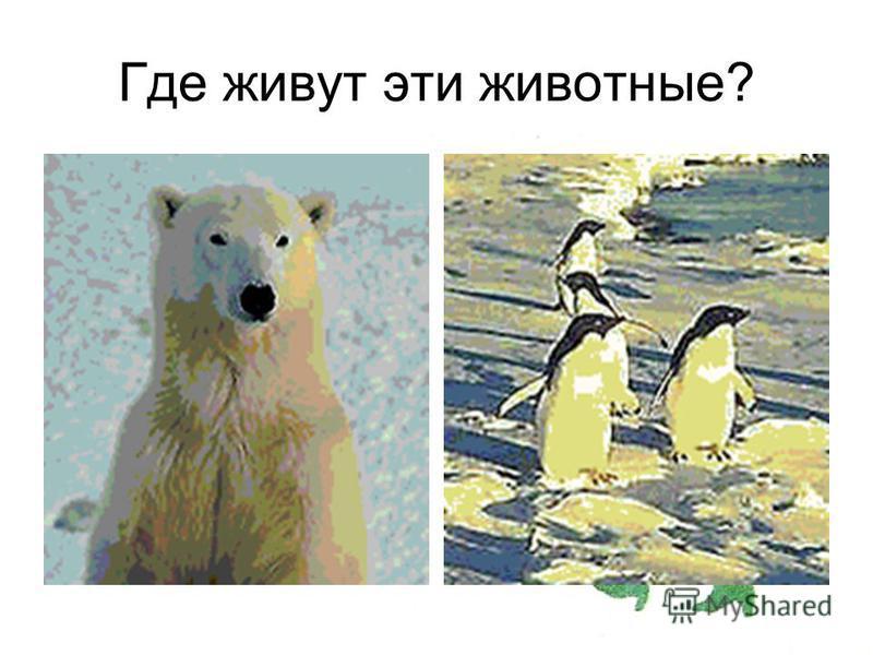 Где живут эти животные?