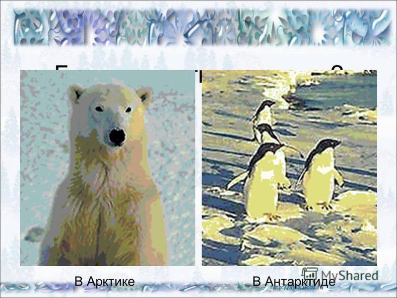Где живут эти животные? В АрктикеВ Антарктиде