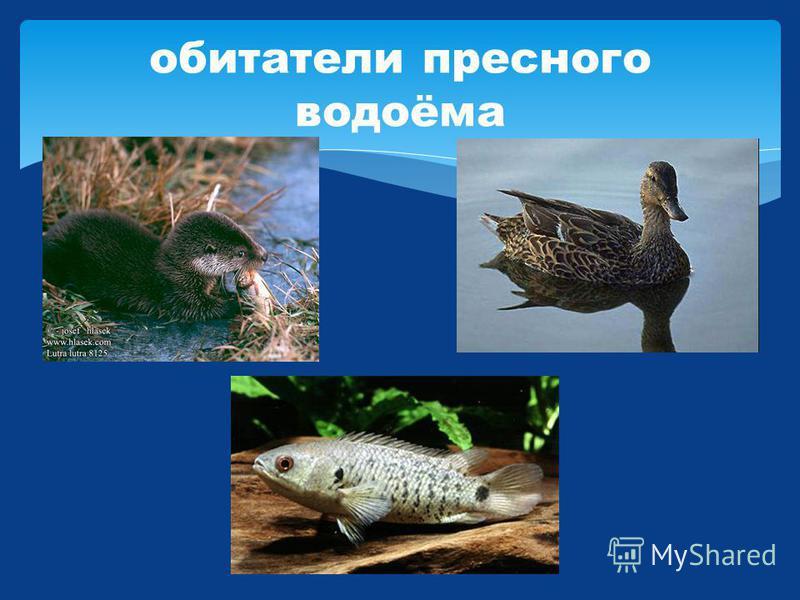 обитатели пресного водоёма
