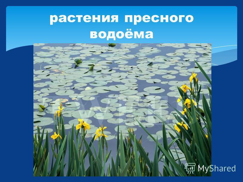 растения пресного водоёма