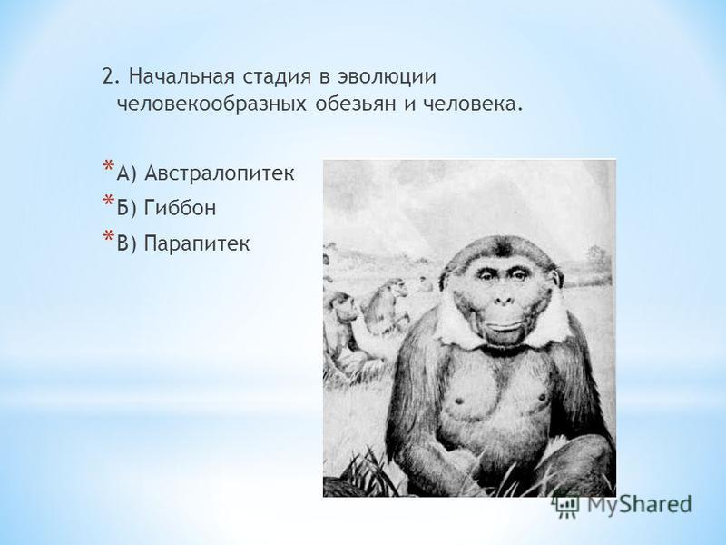 2. Начальная стадия в эволюции человекообразных обезьян и человека. * А) Австралопитек * Б) Гиббон * В) Парапитек