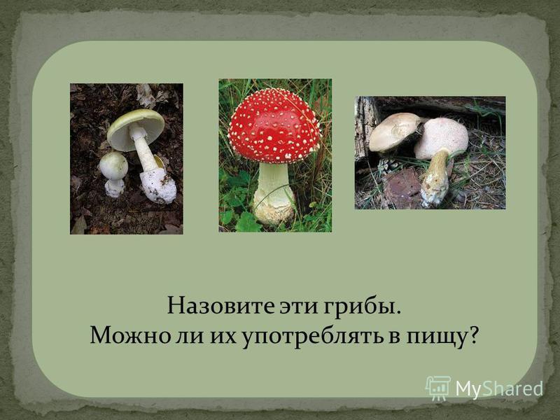 бледная поганка мухомор желчный гриб Ядовитые грибы! Назовите эти грибы. Можно ли их употреблять в пищу?