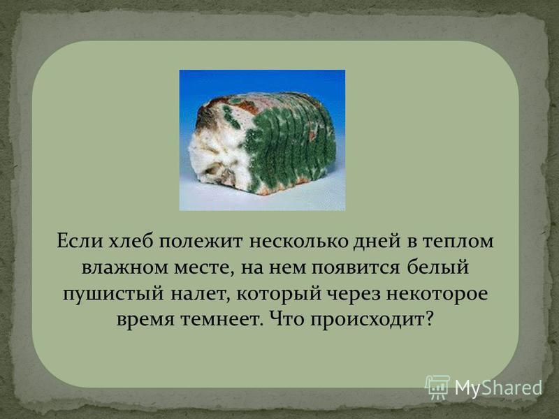 мукор на хлебе Если хлеб полежит несколько дней в теплом влажном месте, на нем появится белый пушистый налет, который через некоторое время темнеет. Что происходит?